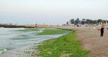 Algele de pe malul mării dau bătăi de cap operatorilor.