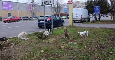 Sufocați de rahați! Cine adună maidanezii de pe străzile din Constanța