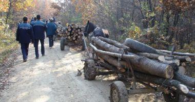 Poliţia Constanţa le-a venit de hac hoţilor de lemne