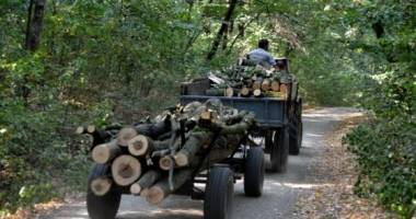La Constanţa se fură şi copacii de pe marginea drumului!