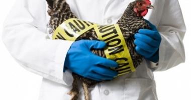 Gripă aviară la Constanţa! A fost activat Centrul Local de Combatere a Bolilor la animale