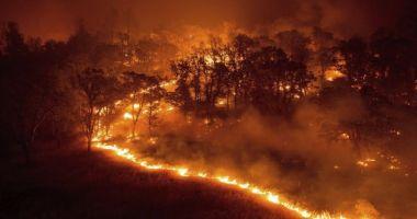 IMAGINI TERIBILE! Cel puţin 50 de morţi, în incendiile de vegetaţie din Grecia