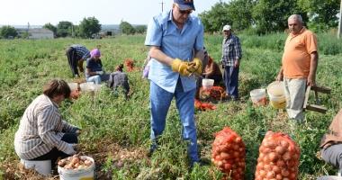 Info agricultură: modul de implementare a schemelor de plăţi