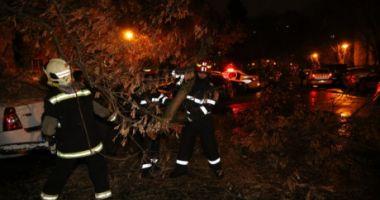 Codul galben a făcut ravagii. Panouri luate de vânt pe A2. Copaci căzuți și mașini avariate