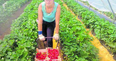 Joburi în străinătate. Se caută muncitori necalificaţi în agricultură