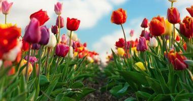 Prognoza meteo în intervalul 4 martie – 1 aprilie. Nu scăpăm de ploi, dar temperaturile cresc