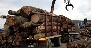 Transportul cu lemne din judeţul Constanţa, luat la puricat de poliţişti