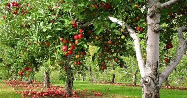 Livezile acoperă 1% din suprafața agricolă a UE