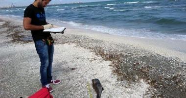 Măcel la malul mării! Şase pui de delfini ucişi de plasele pescăreşti