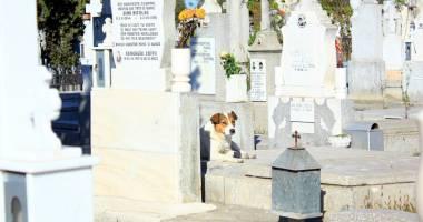 Maidanezii, pericolul dintre morminte. Cimitirul Central, casă pentru haitele de câini