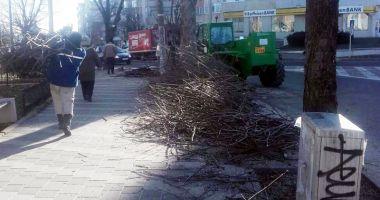 Primăria Mangalia  a început toaletarea copacilor  din localitate