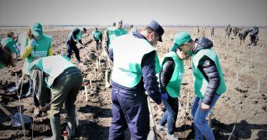 Mii de voluntari la acţiunile de împădurire derulate de Romsilva