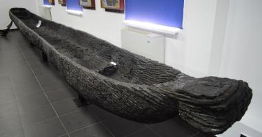 Piese vechi şi rare la Constanţa. Monoxilă lungă de 30 metri la Muzeul Marinei