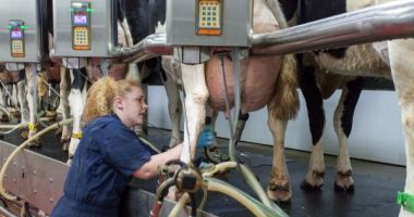 Iată până la de data se poate solicita ajutorul pentru creșterea animalelor