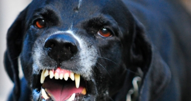 Terorizaţi de câinii fără stăpân!