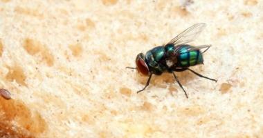 Descoperire uluitoare despre muşte