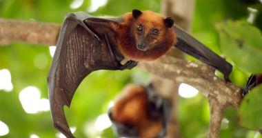 Nipah, virusul foarte periculos care se transmite de la lilieci. 10 oameni au murit deja!