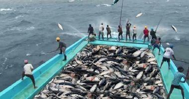 Noi cote de pescuit în Marea Mediterană și Marea Neagră, pentru anul 2022