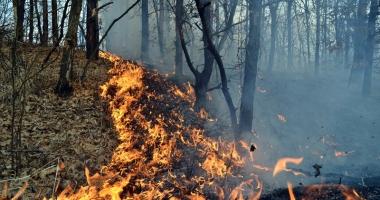 Num�rul incendiilor provocate inten�ionat �n jude�ul Constan�a, �n cre�tere