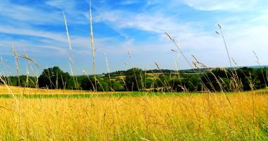 Ajutor pentru cultivarea orezului în zonele defavorizate
