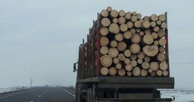 Tânără amendată pentru că a semnalat un posibil furt de lemne