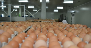 Ministrul Agriculturii din Germania, despre ouăle contaminate  din UE: