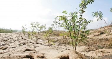 Constănţeni, s-a amânat sesiunea de depunere a proiectelor pentru prima împădurire