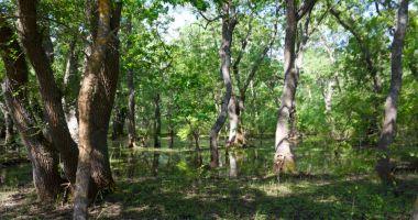 De astăzi, taxa de vizitare a Pădurii Letea poate fi plătită prin sms