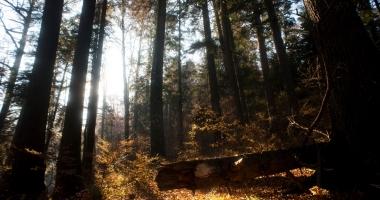 Inspectorul Pădurii, la un pas de a dispărea