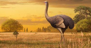 Rămășițele unei păsări uriașe au fost descoperite în nordul Mării Negre. Ea trăiă în urmă cu 2 milioane de ani