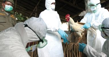 GRIPĂ AVIARĂ LA CONSTANŢA / Creşte numărul animalelor găsite moarte. Centrul Local de Combatere a Bolilor, ACTIVAT