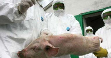 Petre Daea dă vina pe Iohannis, în scandalul pestei porcine