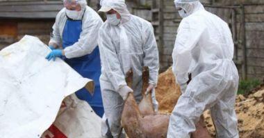 """Noi focare de pestă porcină africană la Constanța. """"Au fost găsiți doi mistreți morți"""""""