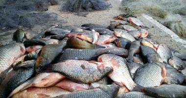 Un adolescent şi un minor, prinşi de poliţişti cu peste 200 de kilograme de peşte