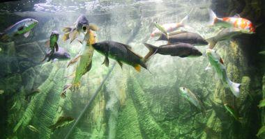 Pești exotici de pe toate continentele la Acvariul din Constanța