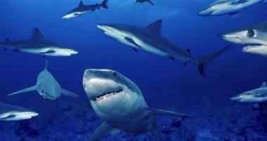 O substanţă produsă de rechini ar putea vindeca hepatita
