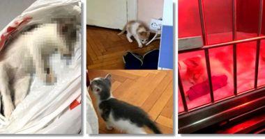 Tânărul acuzat că a omorât pisici adoptate A RECUNOSCUT TOTUL