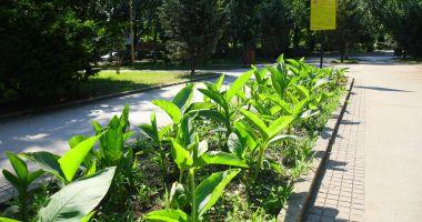 Spațiile verzi din oraș, în atenția administrației locale