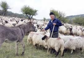 A început plata ajutorului de stat pentru crescătorii de animale