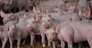 Cioloş: Guvernul a scăpat complet de sub control răspândirea pestei porcine africane