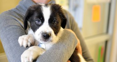 Primăria Constanța a dat startul campaniei de adopție a câinilor fără stăpân