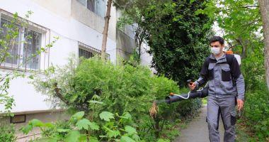 Primăria Constanța a dat startul dezinsecției spațiilor verzi din cartiere