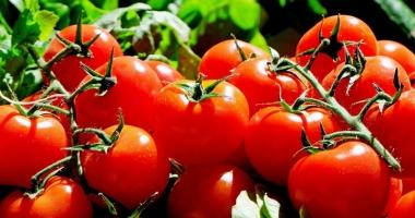 Primele roade ale programului de sprijin pentru tomatele româneşti