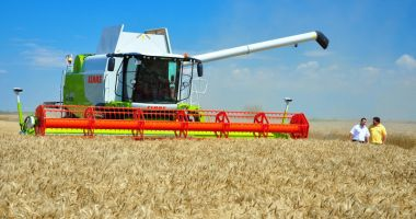 Producţie record de grâu! Constanţa, printre judeţele fruntaşe