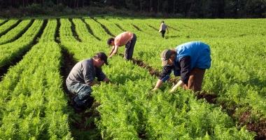 Cota TVA va scădea, în agricultură, de la 19% la 9% pentru încă opt lucrări şi servicii