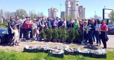 Social-democrații din Constanța au plantat arbuști în apropierea pasajului subteran de la Gară