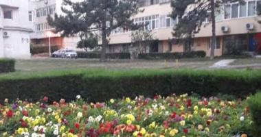F�r� blocuri turn pe spa�iul verde din Tomis II. PUZ-ul a fost anulat definitiv