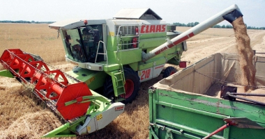 Producție record  la grâu, în acest an
