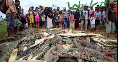 Scandal în Indonezia: 300 de crocodili masacraţi după ce o reptilă a ucis un om