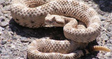 La un pas de moarte, după ce şarpele pe care-l decapitase l-a mușcat